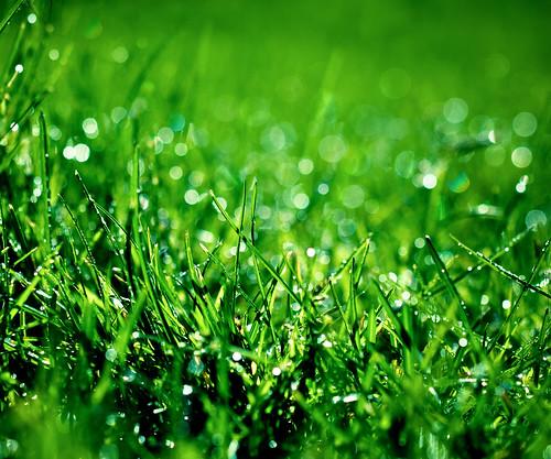 無料写真素材, 花・植物, 緑色・グリーン, 雫・水滴