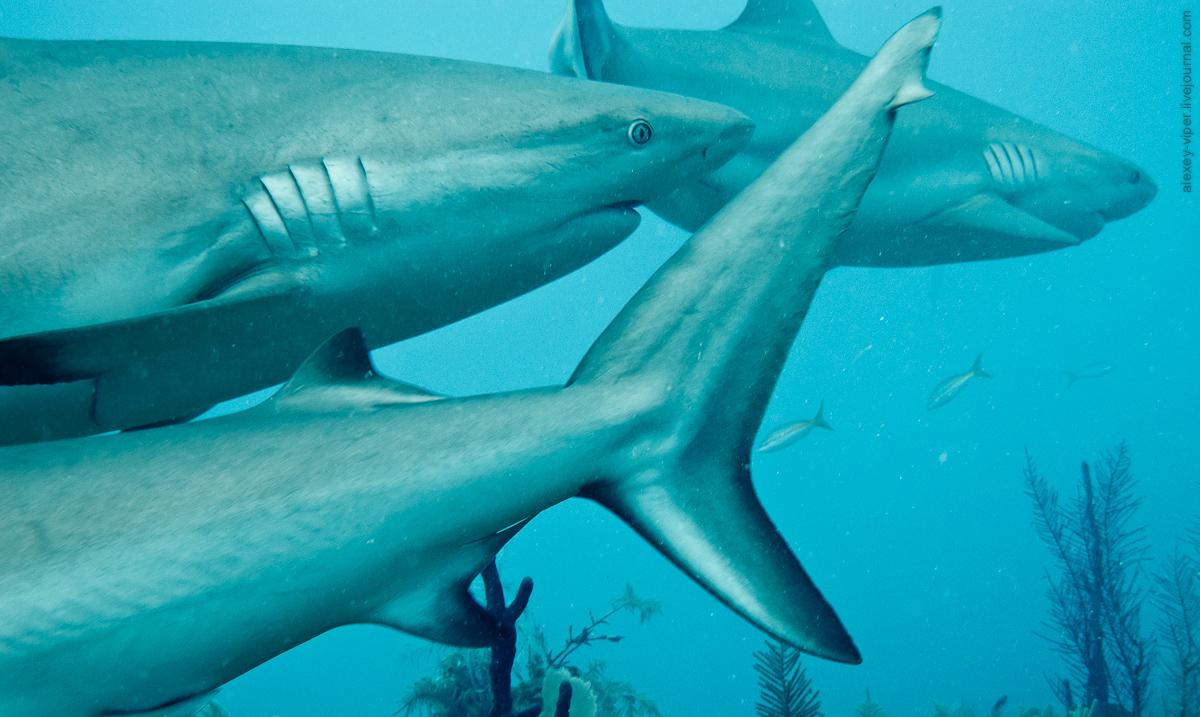 2012.01.12-2012.01.26_dive_safari_[cuba]-diving-006