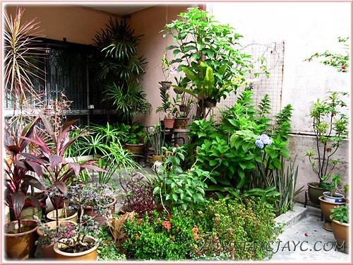 A broader view of our inner garden border and porch