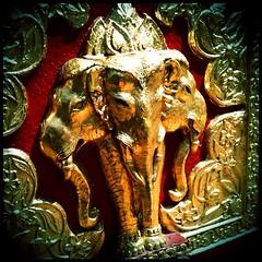 Triple #elephant