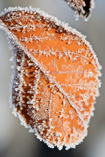 2012 02 05 Morning Frost 047