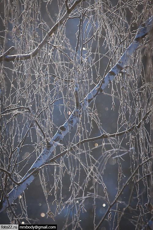 02_trees-[20120203_9697]