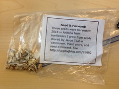 Ben Will Seed It Forward with Sunflowers