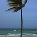 palm tree, beach florida