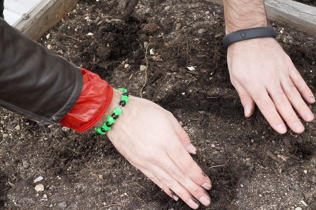 Sugar Snap Pea Planting 2014_9