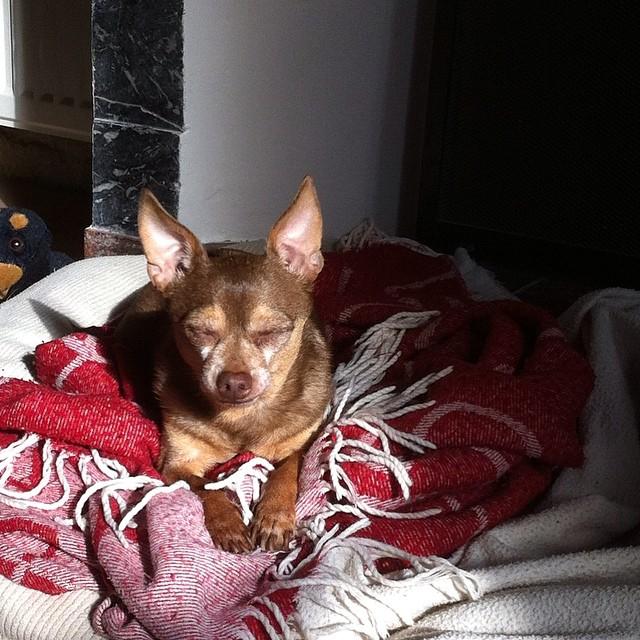Sunbathing in his bed.