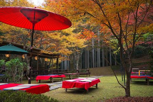 Momiji '11 - autumn leaves #2 (Takao, Kyoto)