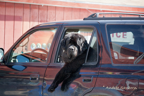 Big Dog Driving the Big SUV-2.jpg