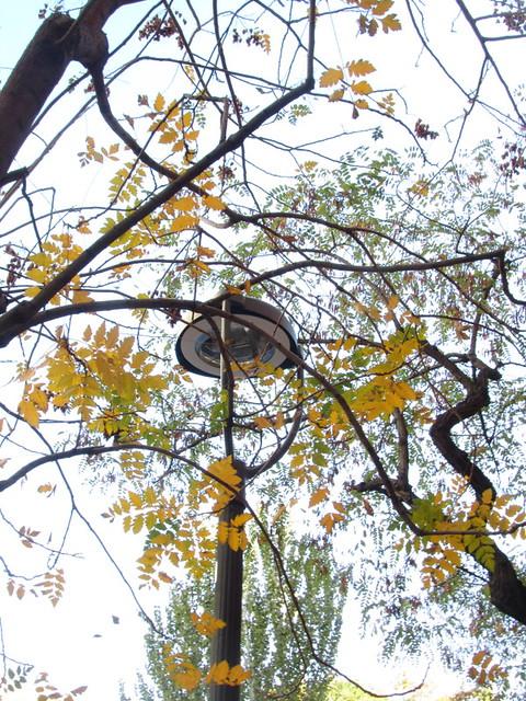 Caligraf�a de las ramas