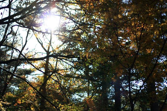紅葉 @ 県立森林公園