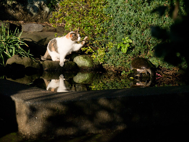 cat and turtle II