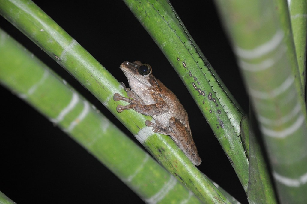 Amazon Jungle! Hello Mr. Frog