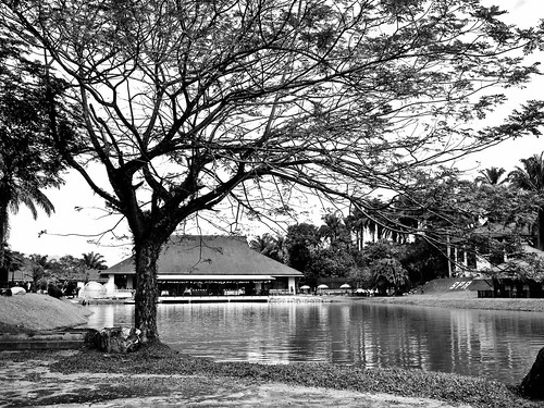IMG_0007 Lake and trees , black and white photography