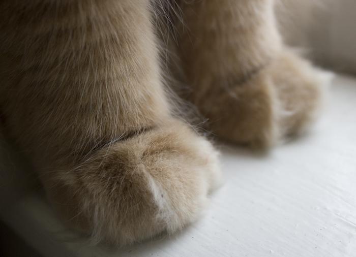 Lucas hands.