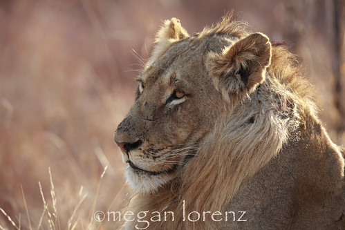Relaxing in the sun... by Megan Lorenz