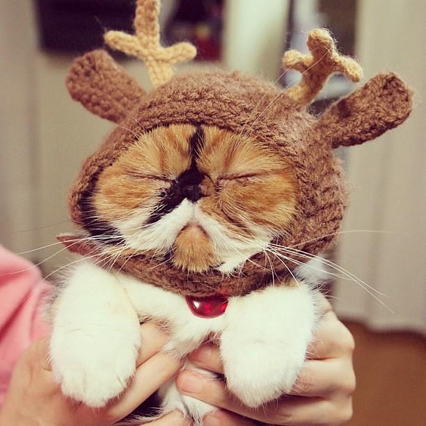 グッにゃい⭐ #meme #cat #cats #xmas