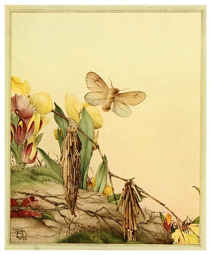 029- Fabre's book of insects ..1921-Ilustrado por Edward Detmold