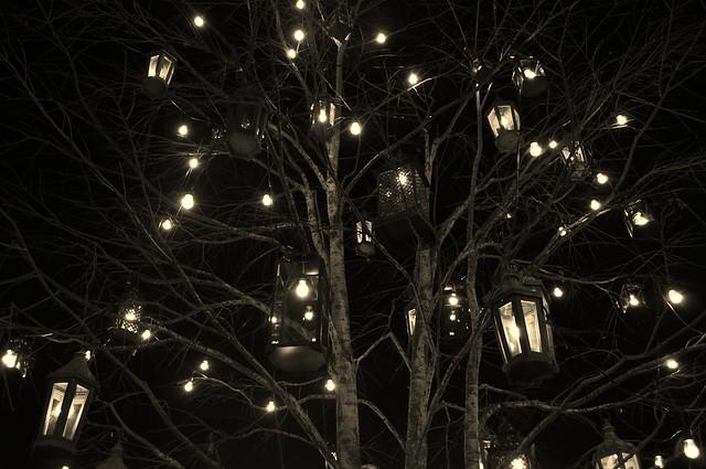 Image gallery lantern tree