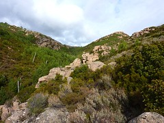 Remontée du Niffru : point extrême atteint vers le N et vue vers la source du Niffru