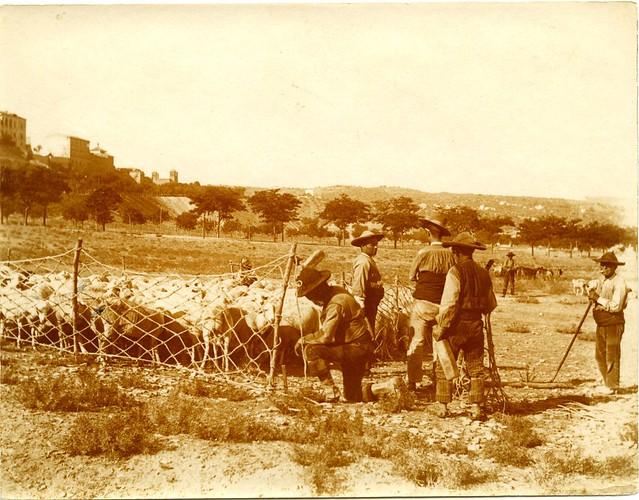 Aprisco en la Vega Baja a comienzos del siglo XX. Fotografía de Pedro Román Martínez. Centro de Estudios Juan de Mariana. Diputación de Toledo