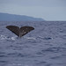Sperm whale by Hugh Madelin