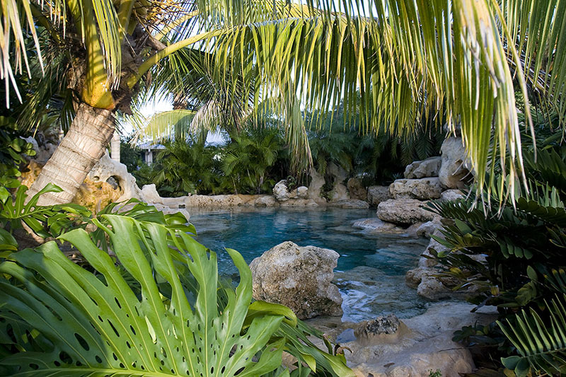 landscaping swimming pool tropical plants