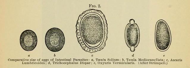 Intestinal parasite eggs | Flickr - Photo Sharing!