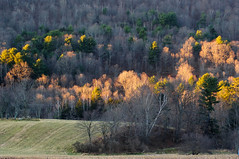 Morning light on Delaware valley