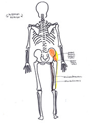 hip internal rotation