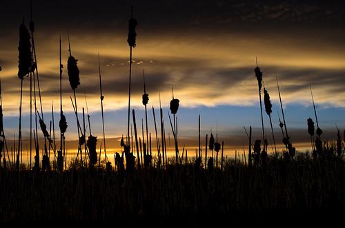 wild lake art night clouds sunrise day iowa wildrice