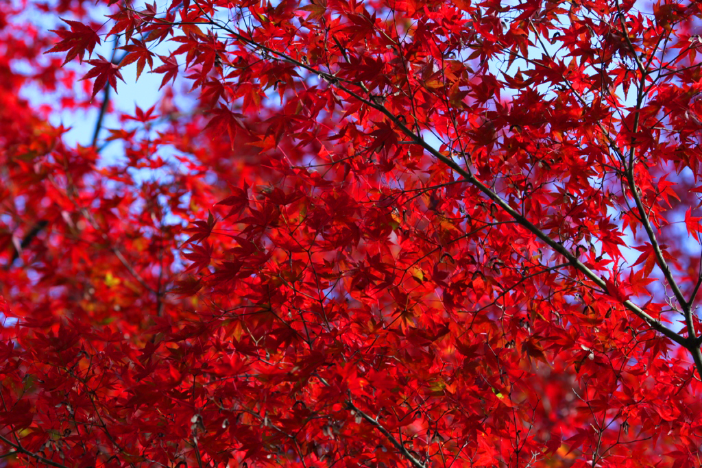Kyoto Arashiyama tourist guide (17)