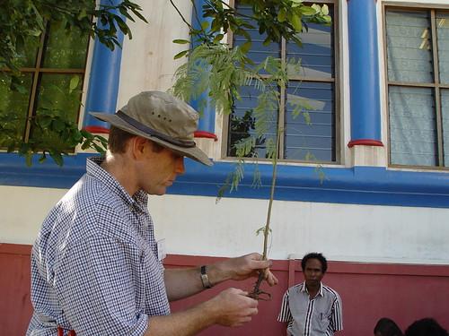 easttimor nurseries timorleste