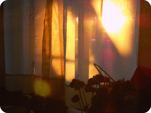 sunlit curtains