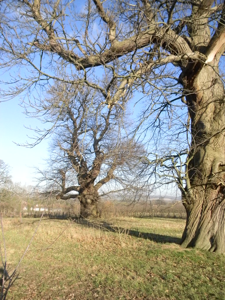 2 of the 3 Chestnuts Pluckley Circular In the orchard near Little Chart