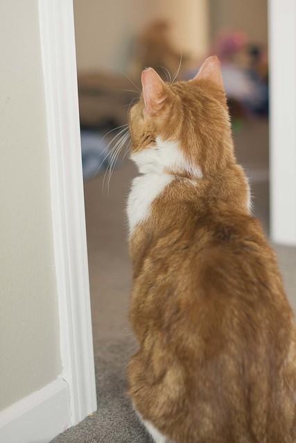 wink the guard cat.
