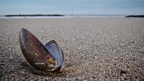 Mussel Beach
