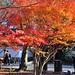 2010 京都 秋:南禪寺