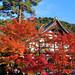 2010 京都 秋:永観堂