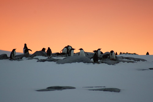 Sunset with penguins by Alex Cowan