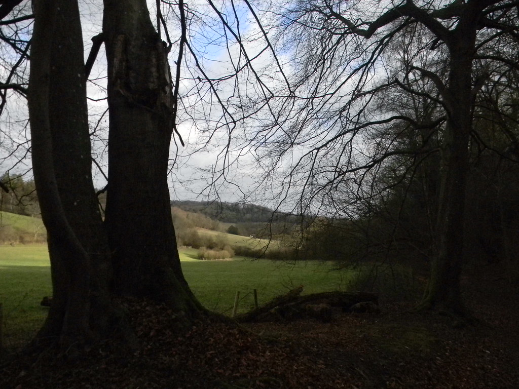 View with tree in the way Westhumble Circular