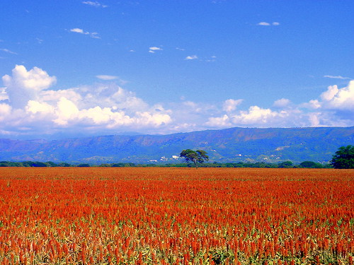 red mountains tree colombia bluesky crops tolima