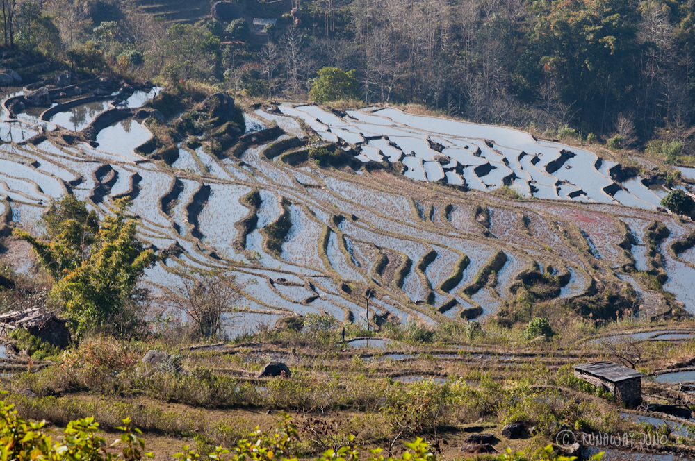 Flooded Rice Terraces
