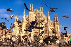 Dove Fighting at the Duomo di Milano