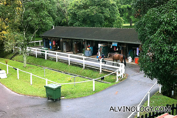 View of the horse stables