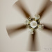 34/366 - A Fan of my Photography :)