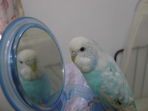 Nico 照鏡子