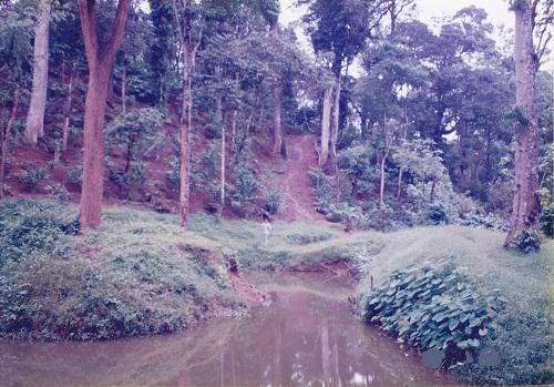 Clove Plantation In Kerala