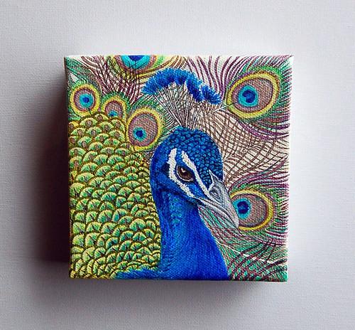Peacock #1  by livingstonestudio