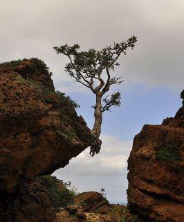 copac in aer