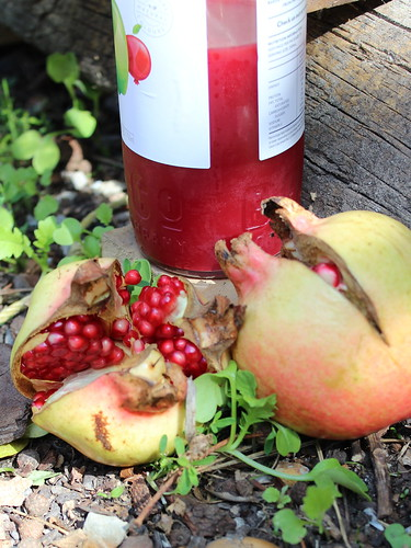 Apple & Pomegranate Syrup
